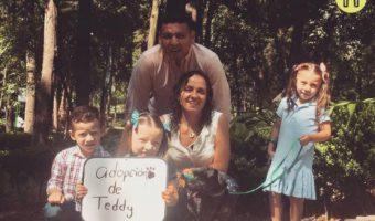 Adopción de Teddy