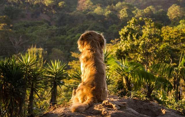 Consejos cuando viajas con tu mascota