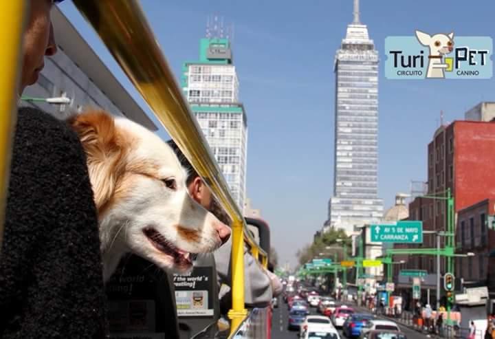 Turibus y mi perro