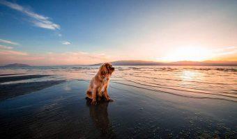 Como cuidar a tu perro en Verano
