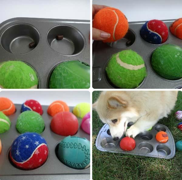 Juegos mentales para tu perro