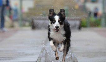 Deshidratacion en los perros