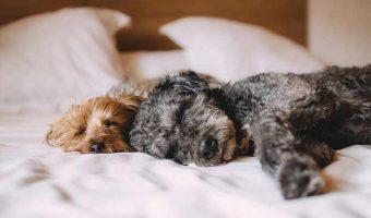 Hoteles que aceptan mascotas en Guanajuato