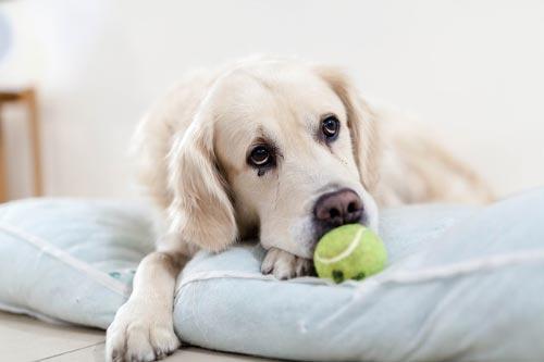 Depresión por la muerte de mi perro