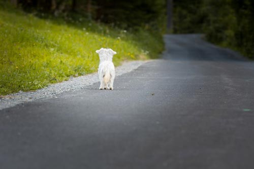 Como superar la depresion de la muerte de mi perro