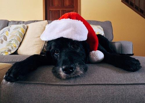 Como preparar pavo para tu perro