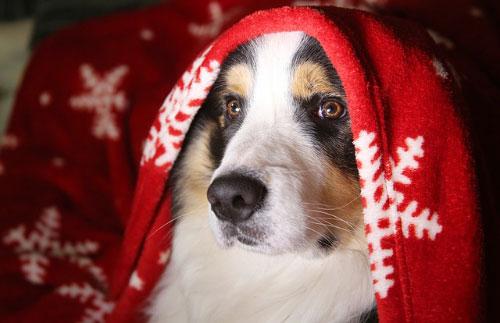 Tips para que tu perro no sufra por los fuegos artificales