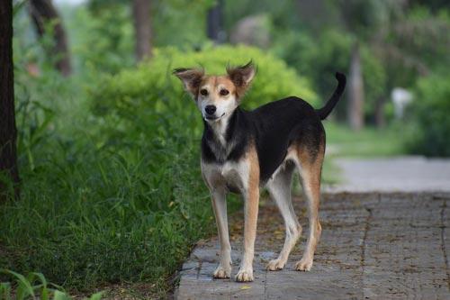 La adopción de un perro es más barata