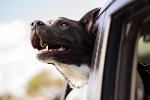 Como hacer feliz a tu perro en el 2019