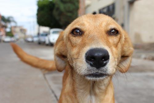 No compres adopta a un perro