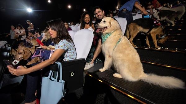 Invitaron a los perros al cine en brasil
