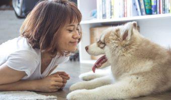 Permiso de paternidad para mascotas