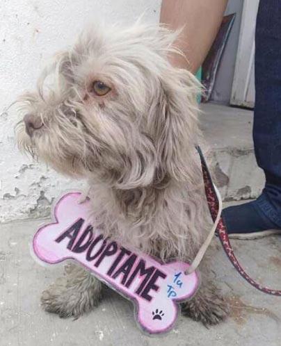Adopcion de perrito princesa