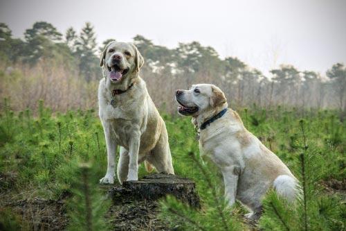 Son perros deportistas