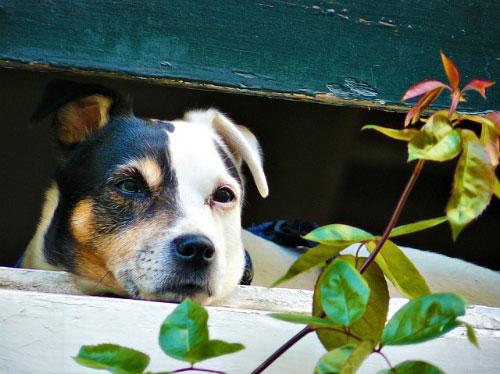 consejos para tu perrito en guarderia