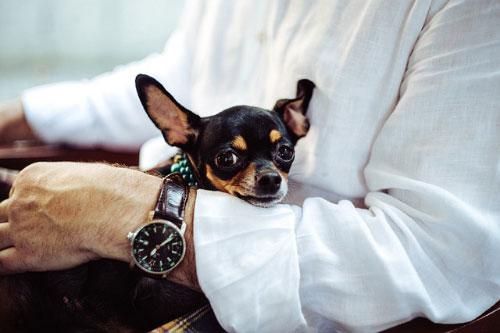 procura que el cuidador tenga varios perritos