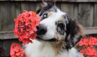 Alergias oara perros en Primavera