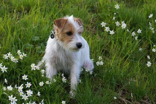 como cuidar a mi perro en primavera