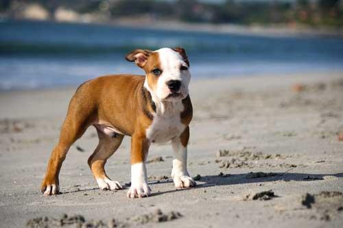 Actividades diarias para tu perro