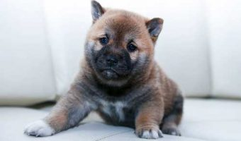 Vacunas en perros