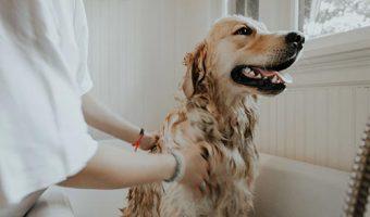 El baño hace feliz a tu perro
