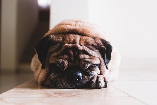 guarderia para tu perro