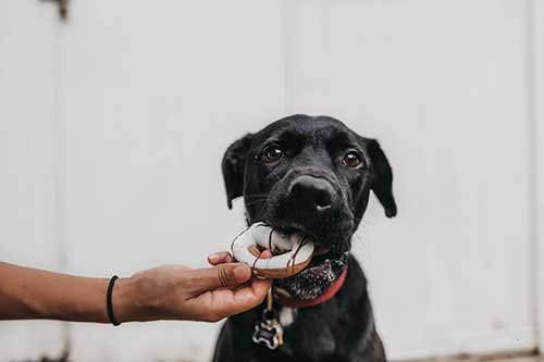 Super alimentos para perros