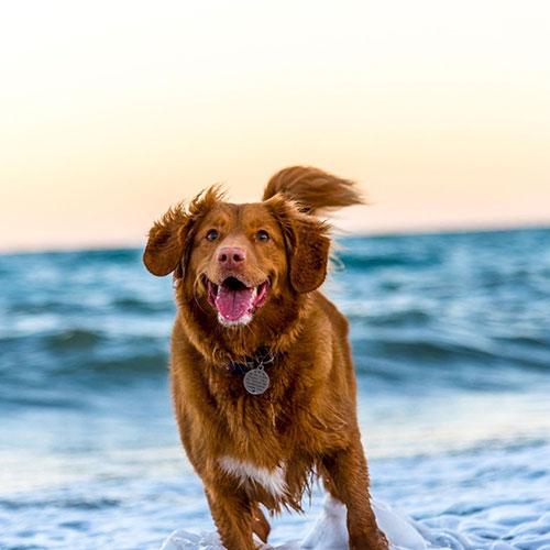 palabras que entienden los perros