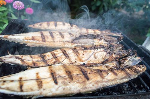 Ingesta de sardina en perros