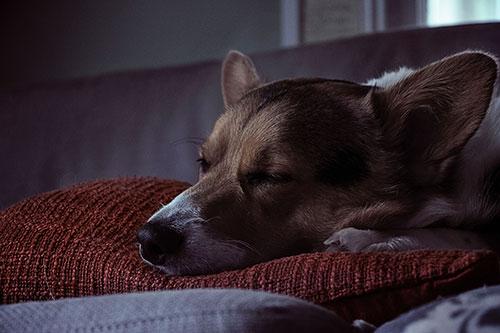 Ventajas de dormir con mi perro