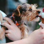 los perros pueden comer azúcar
