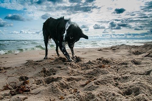 Tips para llevar a mi perro a la playa