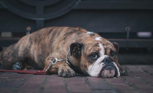 Botiquín de primeros auxilios para perros