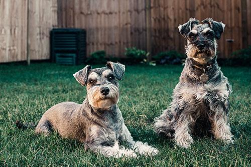 como presentar a dos perros
